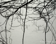 Branches94